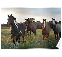 Herd of Horses Poster