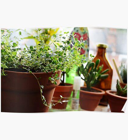 Indoor Herbs In Terracotta Pots Poster