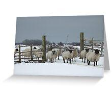 Sheep in a snowy gateway Greeting Card
