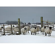 Sheep in a snowy gateway Photographic Print