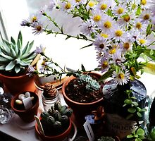 Windowsill Succulents and Michaelmas Daisies by Jessica Reilly