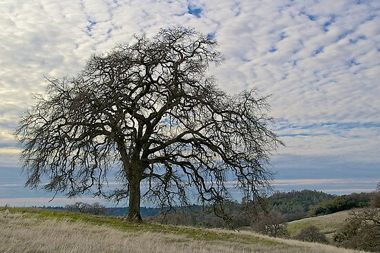 California Winter Landscape by John Butler