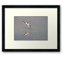 Recurvirostra avosetta Framed Print