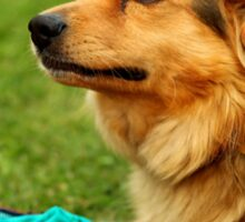 Playful Dog - Nature Photography Sticker