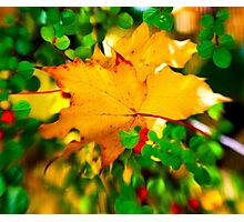 Leafy Dreams Photographic Print