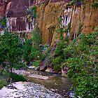 Zion National Park/ Virgin River by Nancy Richard