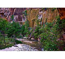 Zion National Park/ Virgin River Photographic Print