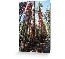 Falls trail at Yosemite national Park,  Greeting Card