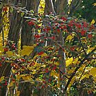 Autumn Beauty by Harry Oldmeadow