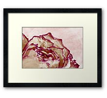 Dried Single Pink Fringed Rose - Macro  Framed Print