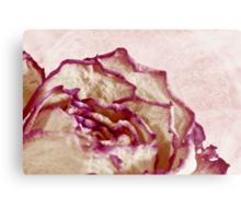 Dried Single Pink Fringed Rose - Macro  Metal Print