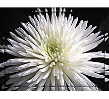 Explosion of White  Photographic Print
