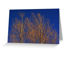 Glimmering Golden Willow  Greeting Card