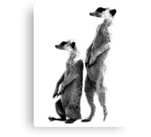 Clever Meerkat. Digital Wildlife Engraving Image Canvas Print