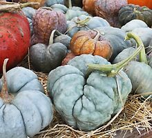 The Misfit Pumpkins.... by DonnaMoore