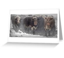 Cows in the snow Greeting Card