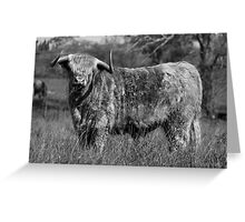 """""""All Bull"""" Highland Cow in the Southern Highlands NSW Australia Greeting Card"""