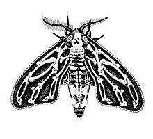 Death's-head Moth by crackedopen