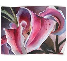 Oriental Lily Poster