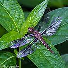 Wings of glass by Dwellsphoto