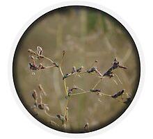 Wheat Fields by Inkblot Photographic Print