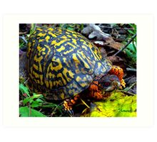 Colorful Box Turtle Art Print