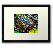 Colorful Box Turtle Framed Print