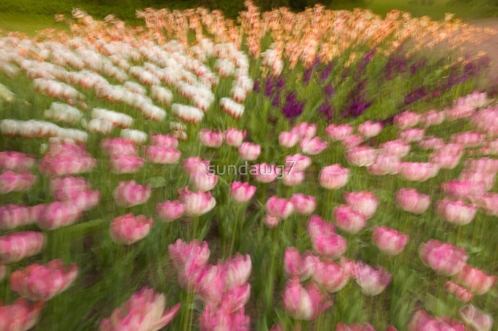 Tulip Overture by sundawg7