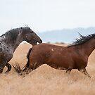 The Stallion's Bite by Kelly Jay