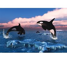 Killer Whales In The Arctic Ocean Photographic Print