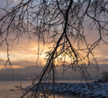 A Curtain of Frozen Branches - Ice Storm Sunrise Sticker