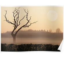LONESOME Old Tree in a Winter Sunset Poster