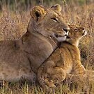 Lion Baby with Mother by Henry Jager
