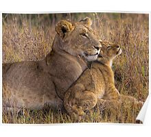 Lion Baby with Mother Poster