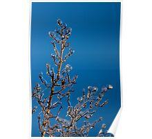 Mother Nature's Christmas Decorations - Ice Jewelry Poster