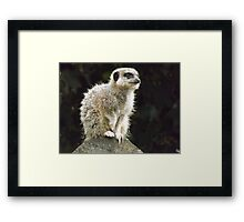 Meercat    So cute as tote  house trained Framed Print