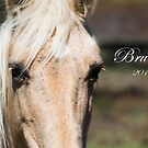 Brumbies of the Guy Fawkes River by Laura Sykes