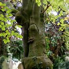 Strange Tree in the Cemetery by AnnDixon