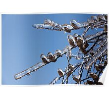 Mother Nature's Christmas Decorations – Glistening Twigs and Pine Cones Poster