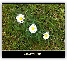 A HAT TRICK - 3 DAISIES IN A ROW by Colleen2012