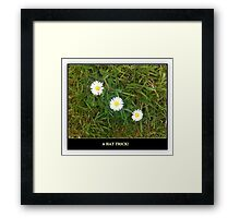 A HAT TRICK - 3 DAISIES IN A ROW Framed Print