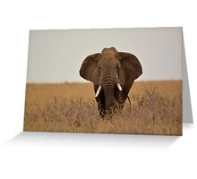 Elephant warning  Greeting Card