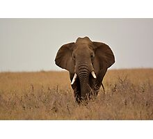 Elephant warning  Photographic Print