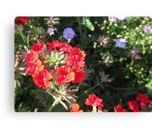 LYCHNIS - VIEW LARGE Canvas Print