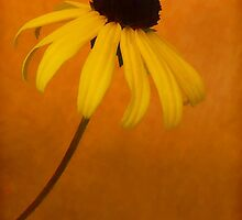 Coneflower by Mary Ann Machi