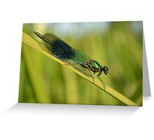 Banded demoiselle female  Greeting Card