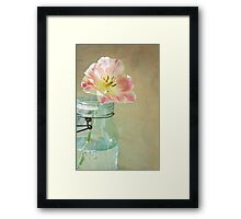 Pink and Yellow Tulip in Vintage Blue Jar Framed Print