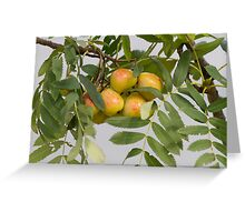 pears on the tree Greeting Card