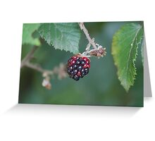 blackberries in the forest Greeting Card