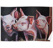 Piglets Poster